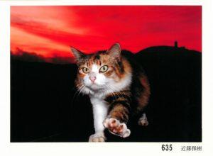 ねこ635