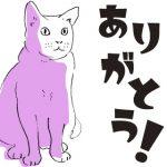白猫コトンちゃん