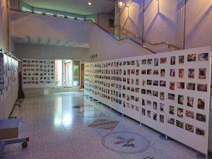 大佛次郎×ねこ写真展2020の展示風景